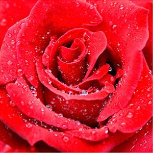 Profile 907d657fba153d35f91f09ddd4771665 romance audiobooks